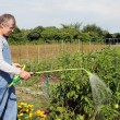Foto Stock: Watering the garden