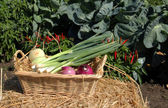 Onion vegetable basket — Stock Photo