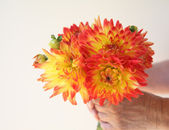 Man holds orange and yellow dahlia bouquet — Stock Photo