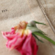 Fading rose on vintage handwriting — Stock Photo