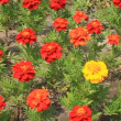 Stock Video: Flowerbed