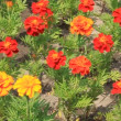 Flowerbed - Stockfoto