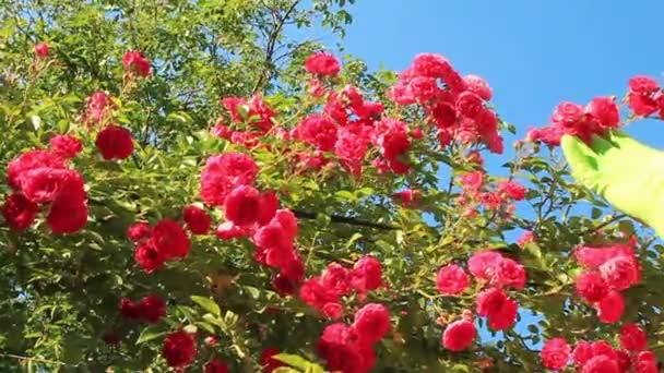 Paraíso de la flor — Vídeo de stock