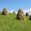 Stock Video: Haystacks