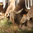 Livestock sector — Stock Video #13153214