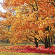 Fall in a park — Stock Photo #13311897