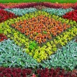 Stock Photo: Color flower-bed
