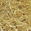 Hay background — Stock Photo #13313163