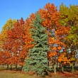 Autumnal beautiful trees — Stock Photo