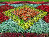 Color flower-bed — Stock Photo