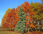 Herbstlich schönen bäumen — Stockfoto