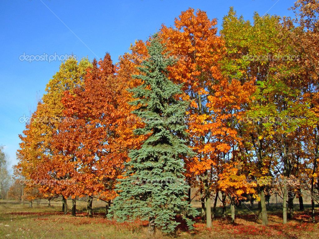 Autumn trees — Stock Photo #13312472