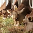 Livestock sector — Stock Video #13386309