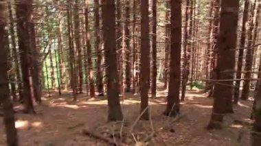 Cross-country run — Stock Video