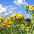 Stock Video: Natural flowers in field