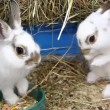 Funny rabbits — Stock Video #13394332