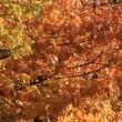 Stock Video: Beautiful autumn