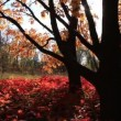 beautiful autumn — Stock Video