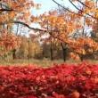 Beautiful autumn — Stock Video