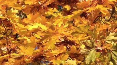 美丽的秋天 — 图库视频影像