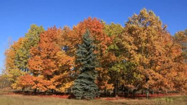 Beautiful autumn — Stock Video #13396876