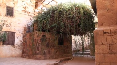 The burning bush. Saint Catherine's Monastery. Sinai. Egypt — Stock Video