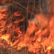 Stock Video: Fire in prairie