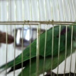 Beautiful bird in cage — Stock Video #17884525