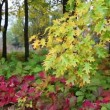 Beautiful autumn in deciduous forest — Stockvideo #20288033