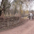 Stockvideo: White horse in harness