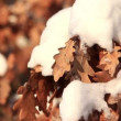 Yellow oak leaves under snow — Stock Video #21495683