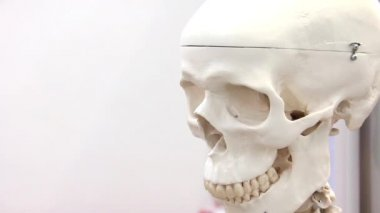 White medical skull — Stock Video