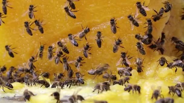 Abejas y miel — Vídeo de stock