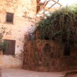 Stock Video: Burning bush. Saint Catherine's Monastery. Sinai. Egypt