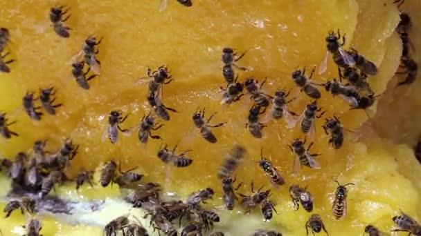 Abeilles et miel — Vidéo
