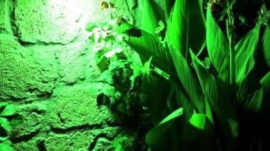 Green plant under green light — Stock Video