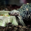 Stock Video: Turtle eats