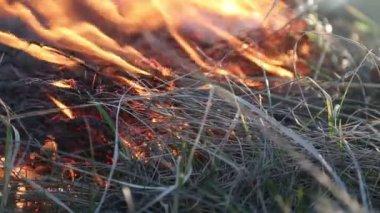 Vypalování trávy — Stock video