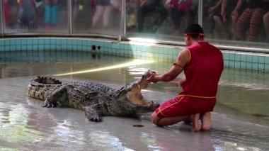 Crocodile show — Stock Video