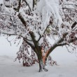Stock Photo: Tree Damage during Noreaster Athena