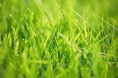 关门的绿草 — 图库照片