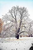 雪の冬の木 — ストック写真