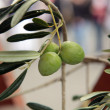 Branch of green olives — Stock Photo #13985136