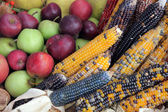 Bushel of apples with colorful Indian corn — Stock Photo