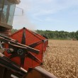 Combine harvesting wheat — Stock Photo #14300391
