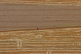 Aerial View: man in wheat field — Stock Photo
