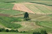 Campo verde e a árvore de cima — Fotografia Stock