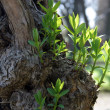Green spring leaves budding new life — Stock Photo #15323941