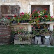 Old house with flowers — Stock Photo