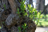Green spring leaves budding new life — Stock Photo